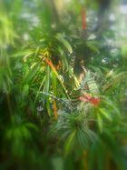 Im Dschungel