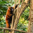Im Dschungel des Masoala Regenwaldes
