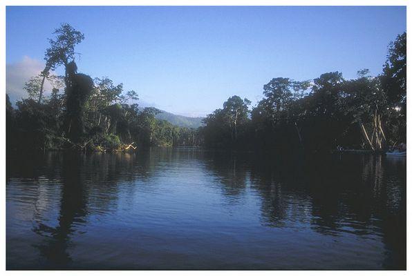 Im Dschungel (Honduras/La Ceiba)