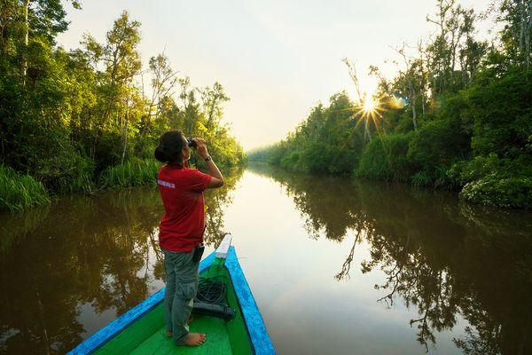 Im Dschungel von Borneo