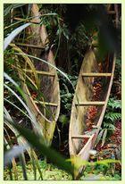 im Dschungel von Masoala