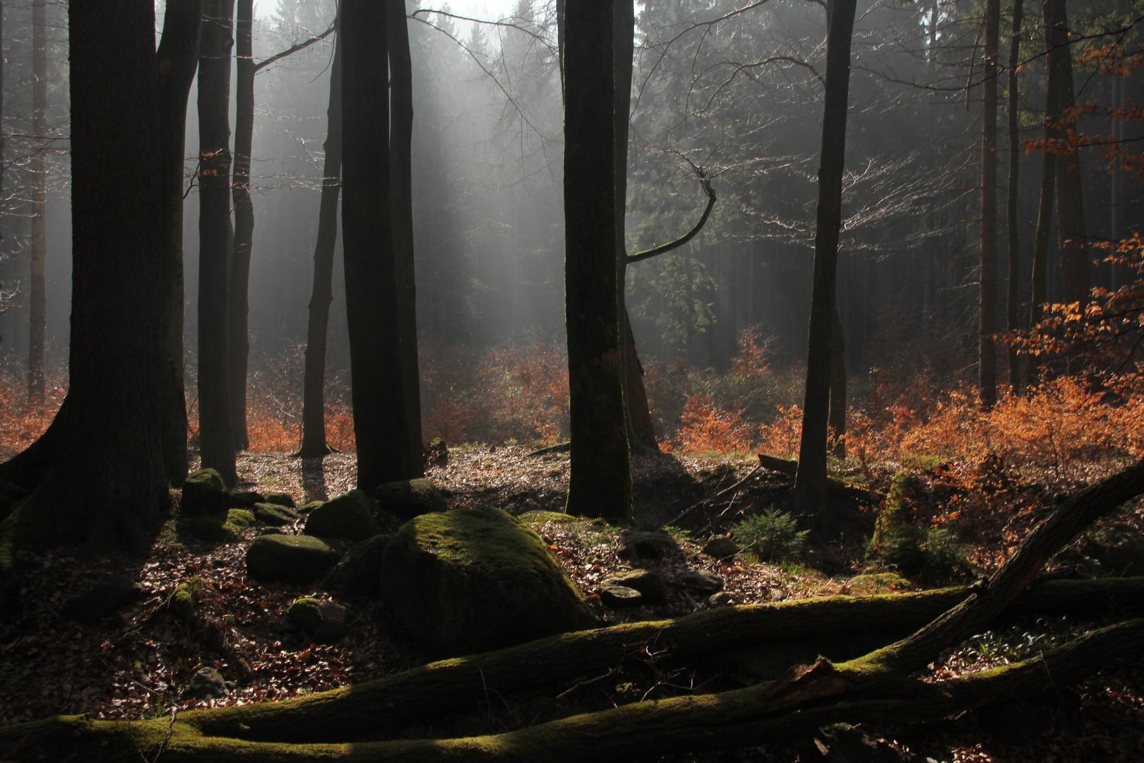 Im düsteren Wald