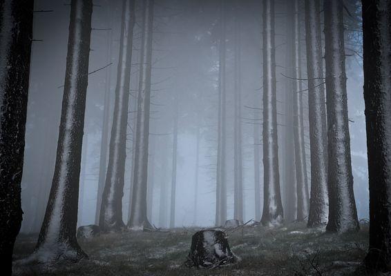 Im Düsterwald