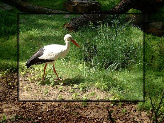 Im Duisburger Zoo...