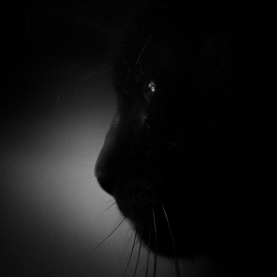 ..... im Dunkel .....