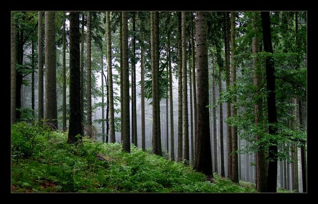 Im dunklem Wald