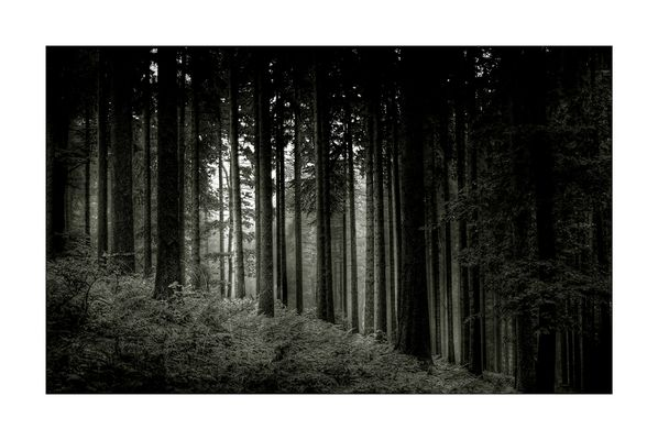 Im dunklem Wald S/W
