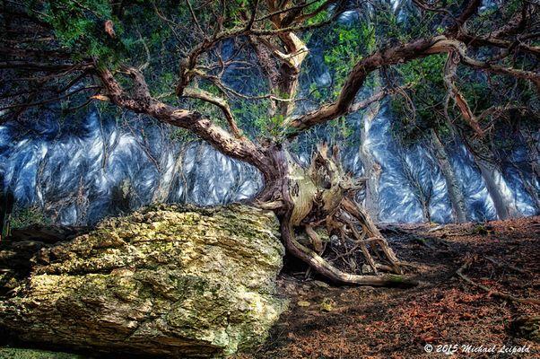 Im dunklen Eibenwald