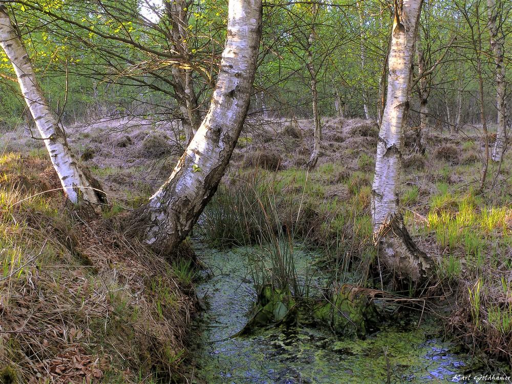 Im Duvenstedter Moor