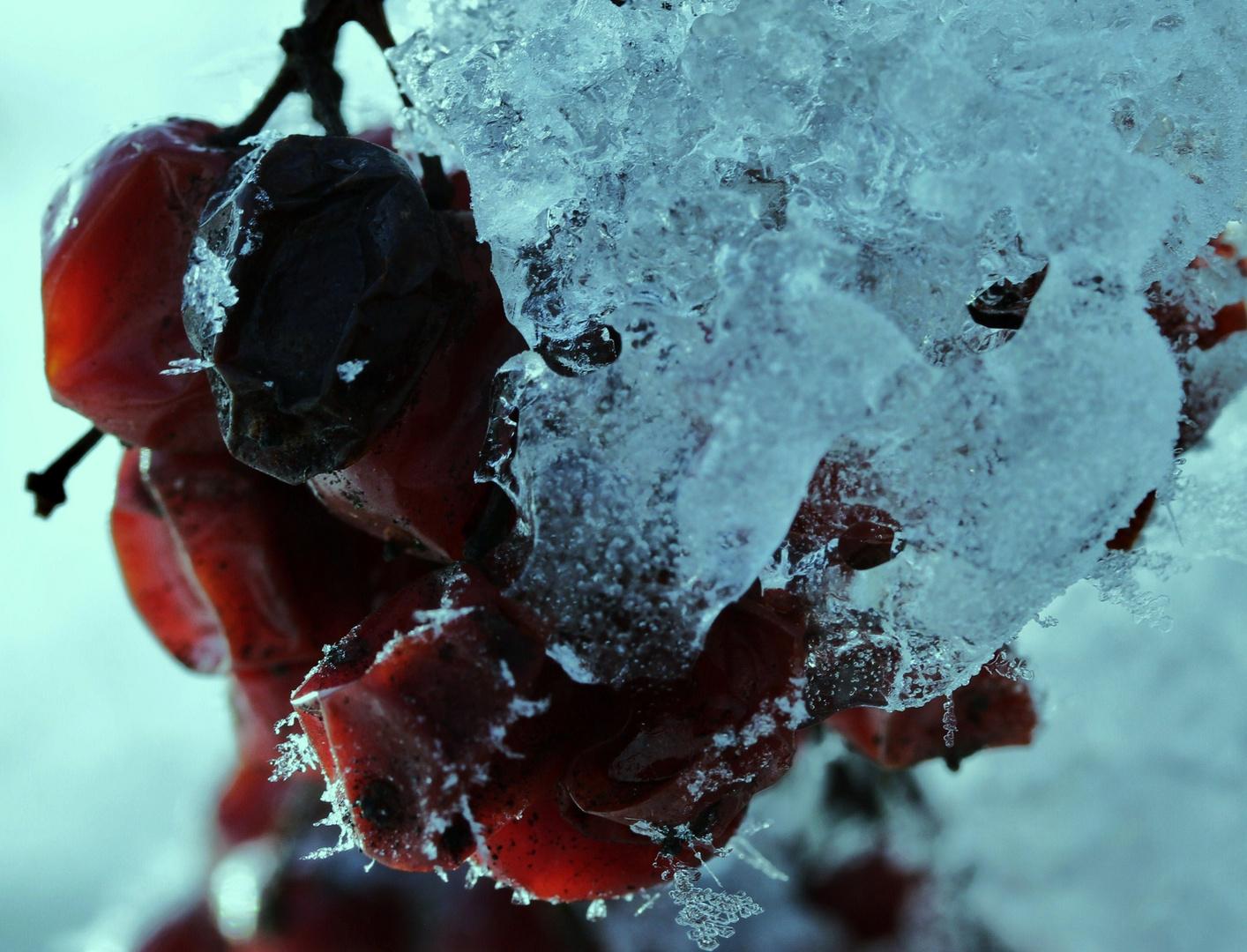 im Eis gefangen.....