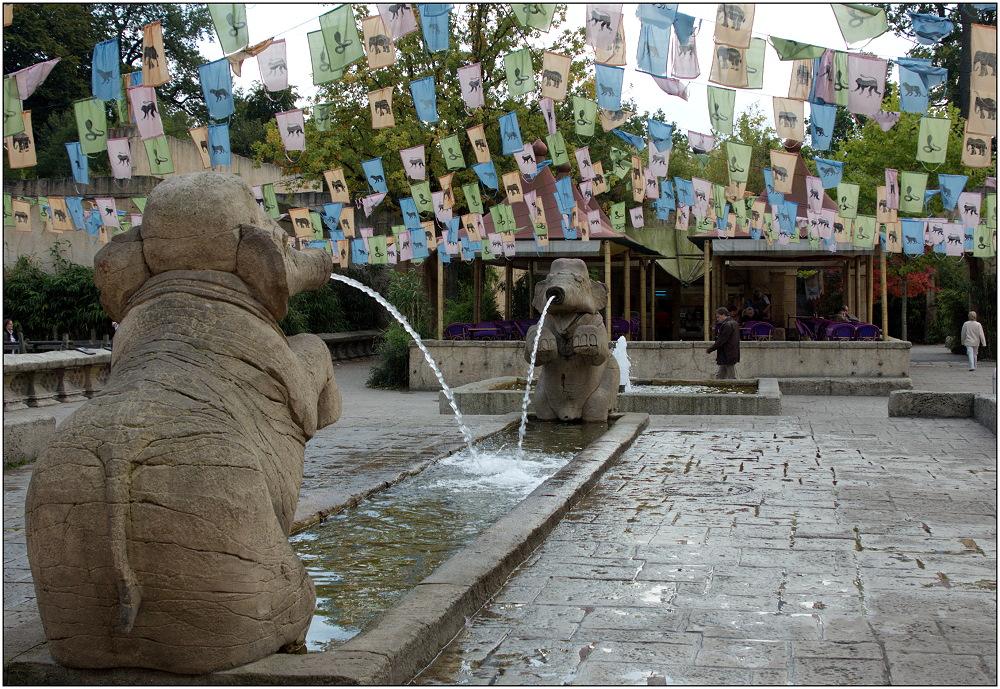 ... im Elefantenpark ...