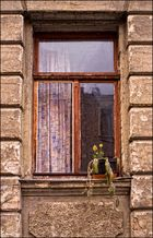 Im Fenster