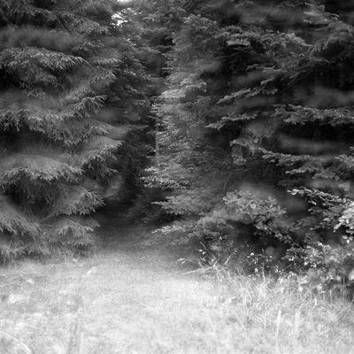 Im finsteren Wald.....