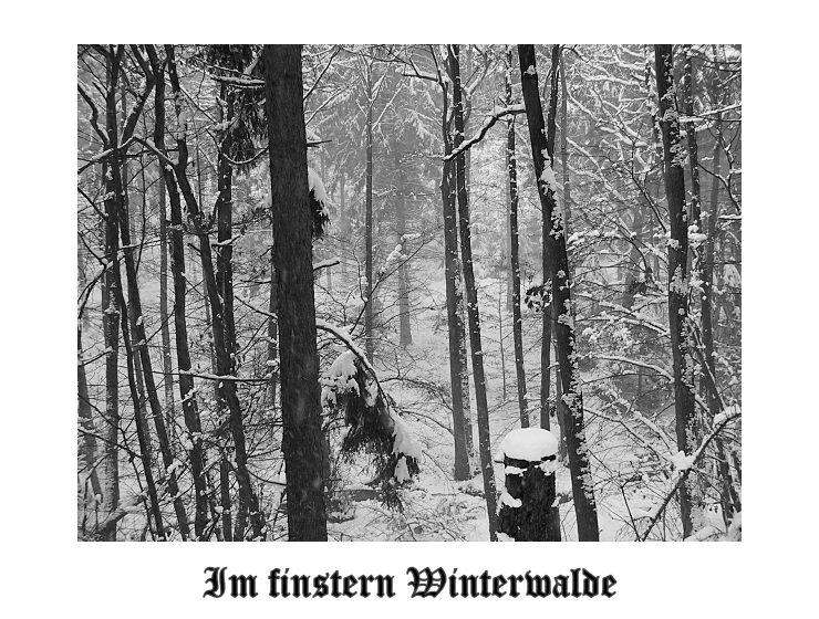 Im finstern Winterwalde