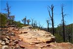 Im Flinders Ranges Nationalpark