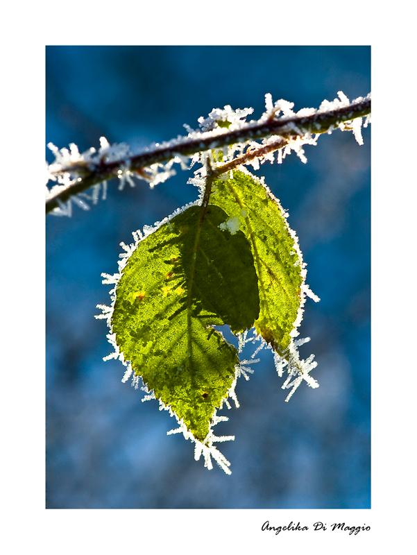 Im Frostmäntelchen