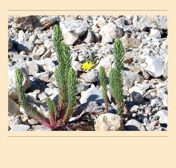 Im Frühjahr zeigt die Natur ihre Kräfte