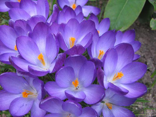 Im Frühjahrskleid