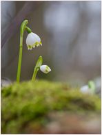 ..im Frühligswald
