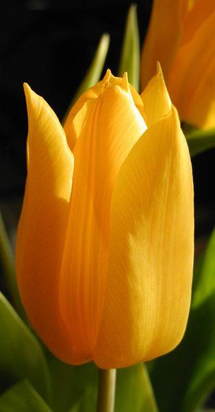 Im Frühling ...