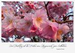 Im Frühling ... (Mitmach-Aktion)