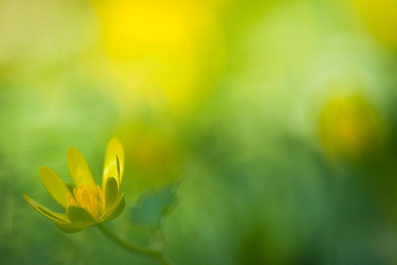 Im Frühlingsgrün...