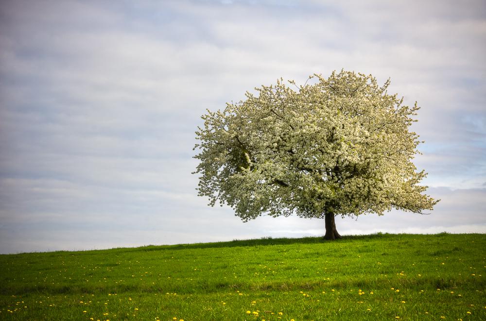 im Frühlingskleid