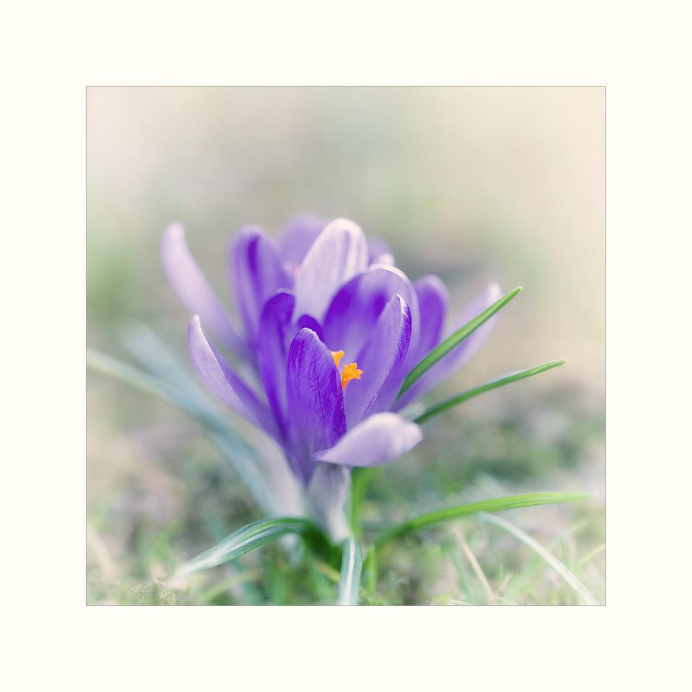 ...Im Frühlingsreigen...
