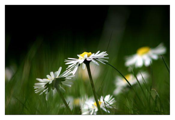 ....im Frühlingswind...