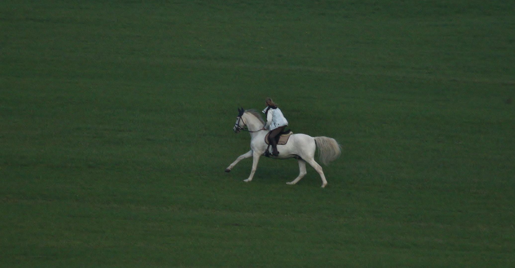 Im gallop durch die wiese