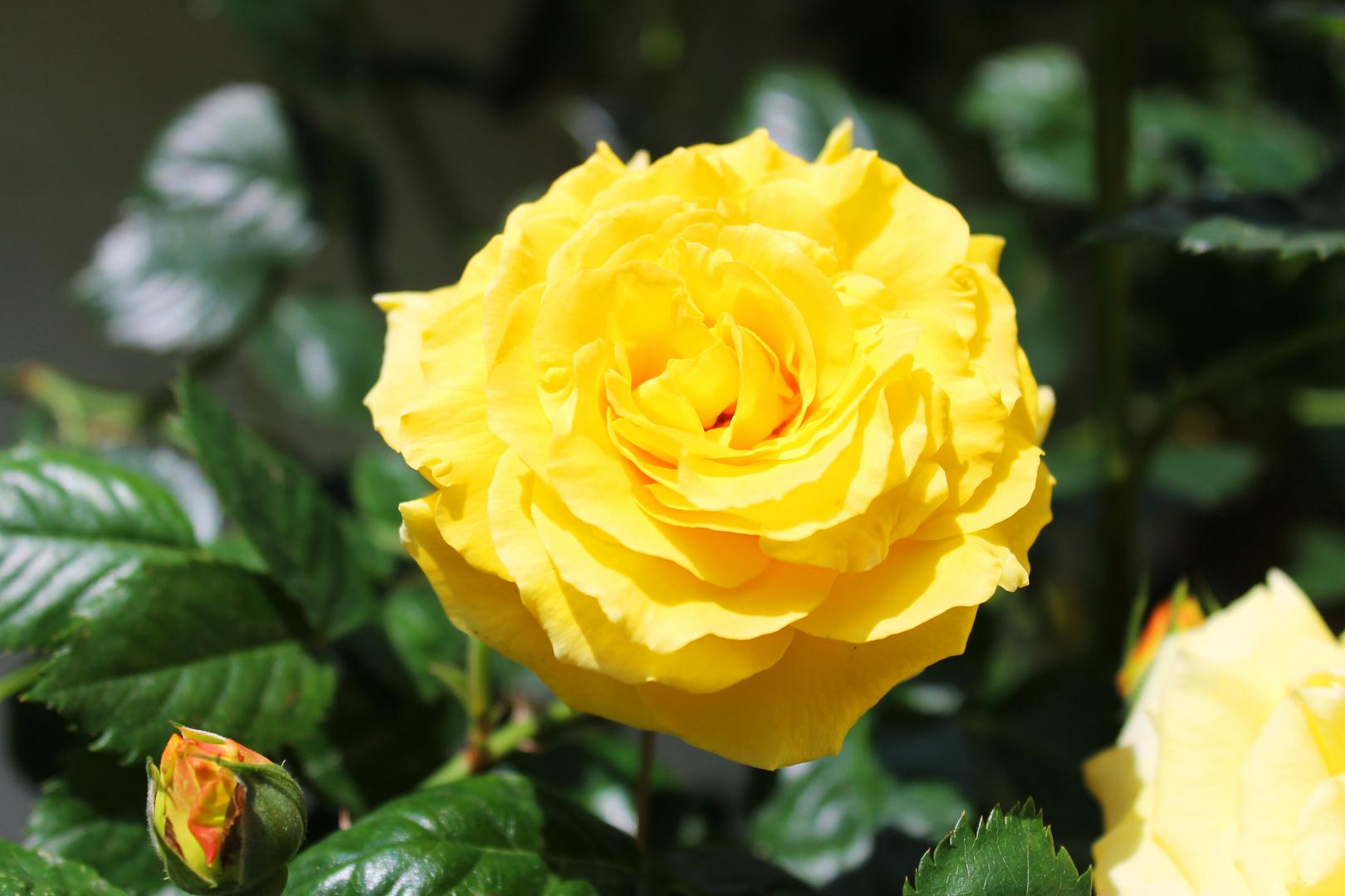 Im Garten 05/2014