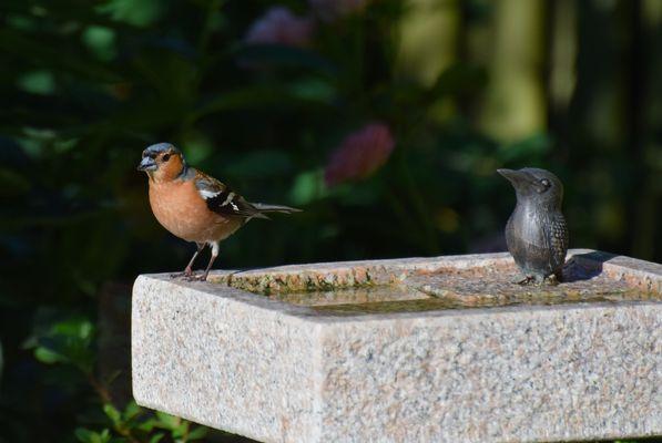 Im Garten an der Vogeltränke!