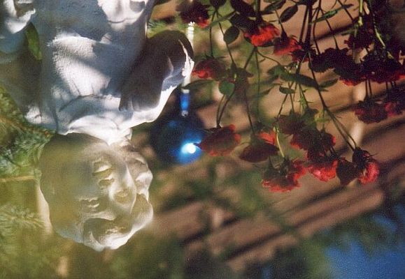 Im Gartenteich...