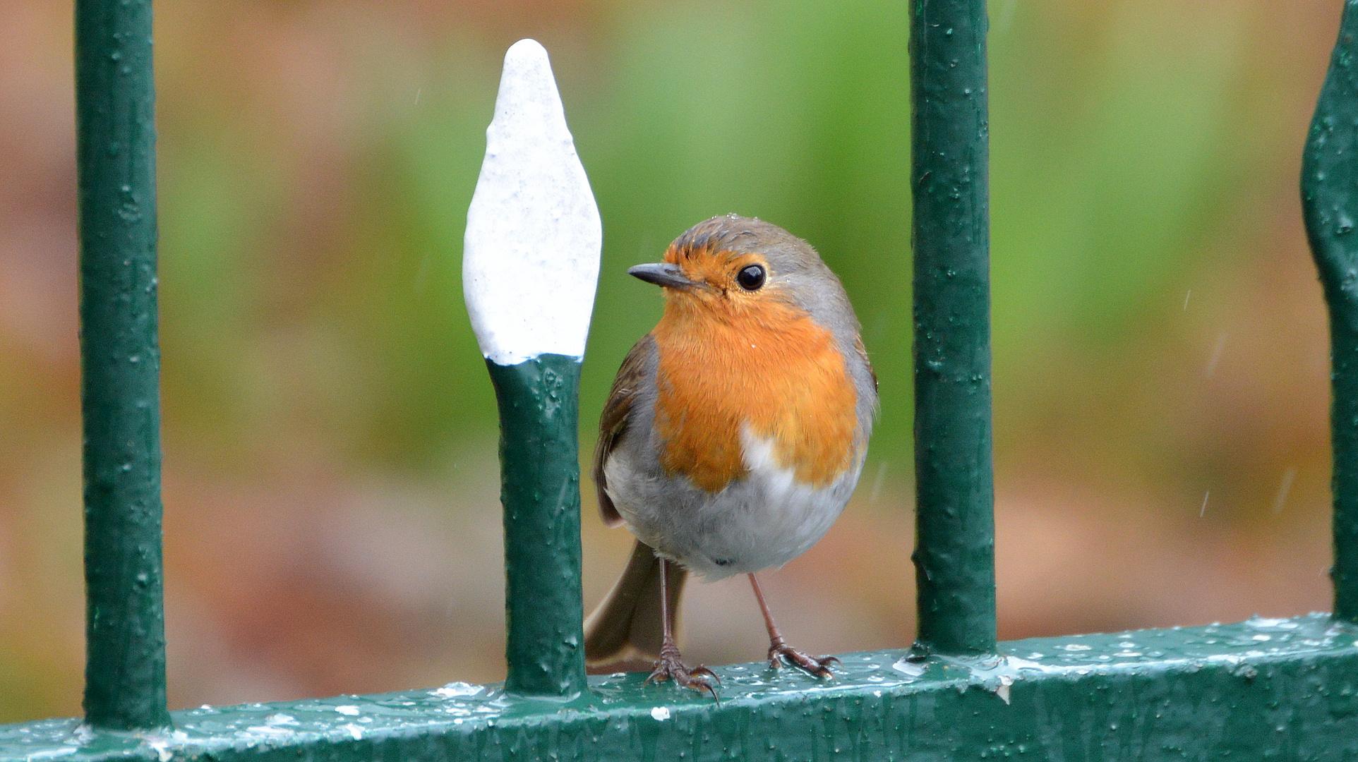 Im Gartenzaun..