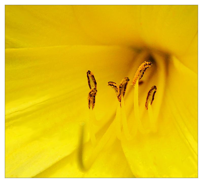 ...im gelben reich....