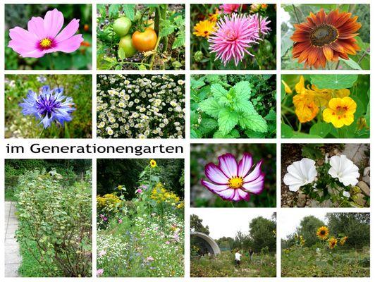 im Generationen- Garten im Petuelpark