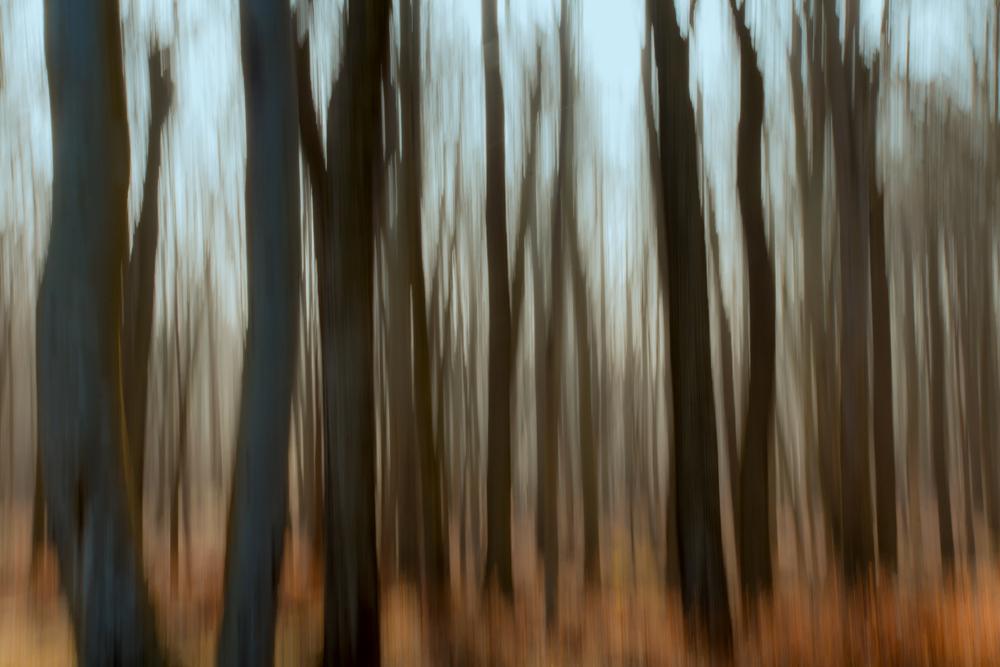 Im Gespensterwald-2