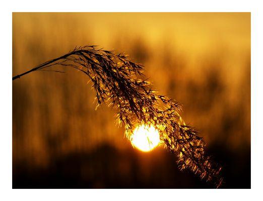 Im Glanz der Sonne