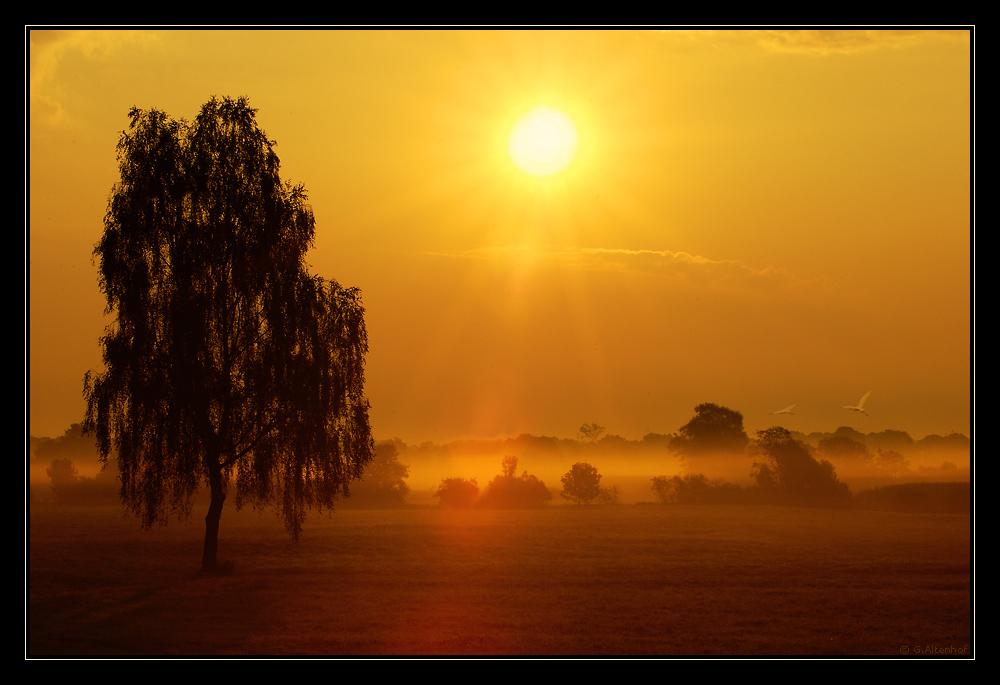 im goldenen Gegenlicht...