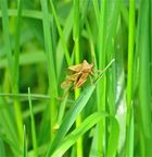 ... im Gras entdeckt 1 !!!...