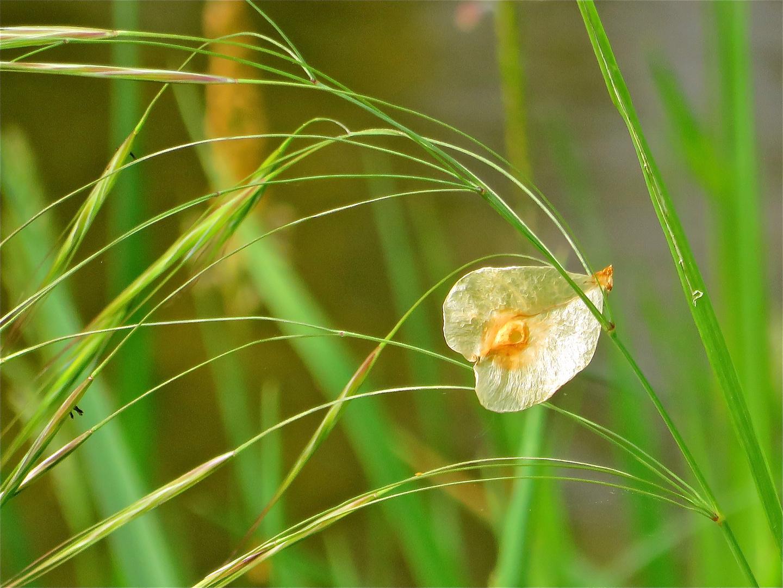 ... im Gras entdeckt !!!...