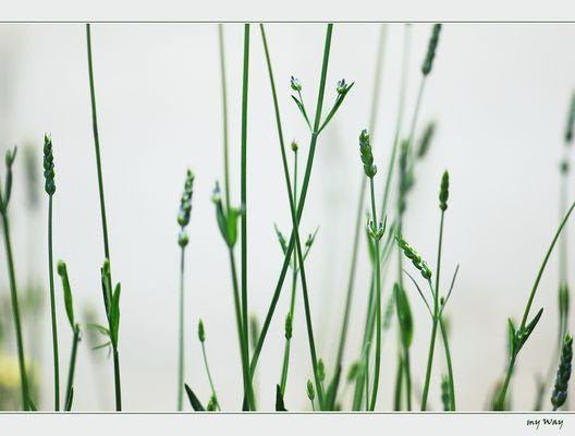 im Gras liegen... ( I )