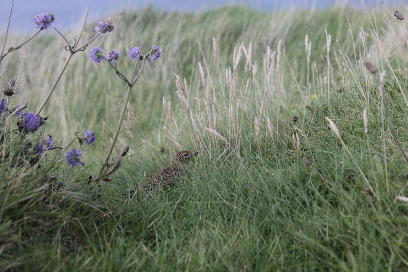 Im Gras versteckt
