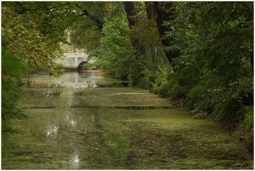 Im grünen Blättermeer