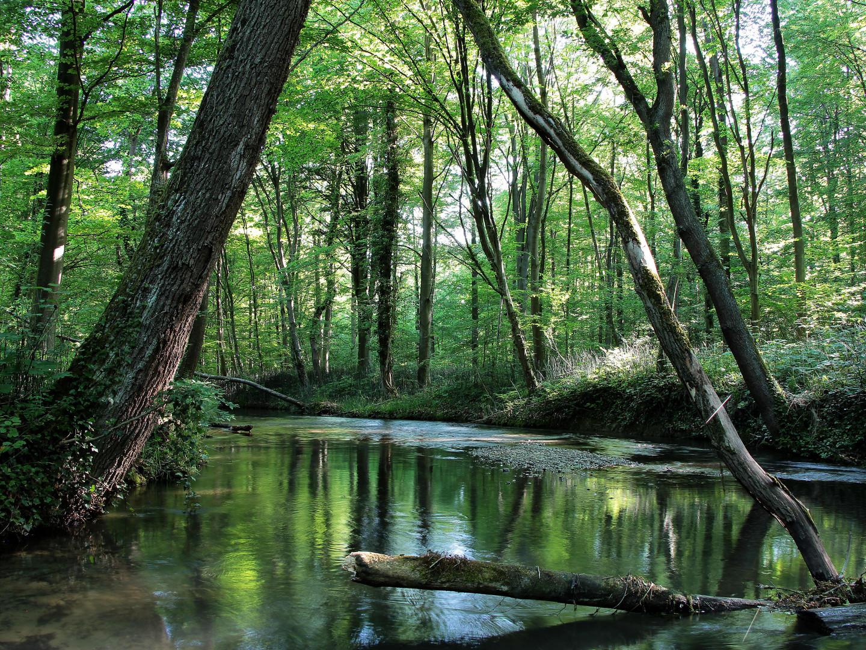 Im grünen Fluss