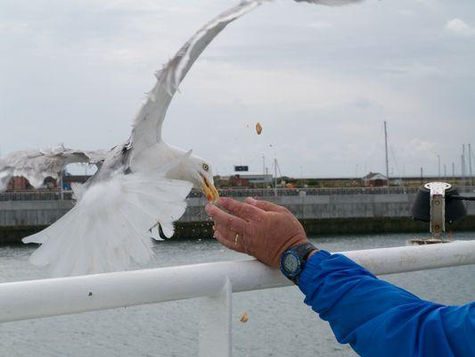 Im Hafen vor Helgoland