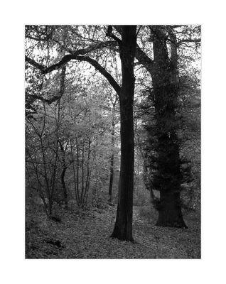 Im Haldenwald I