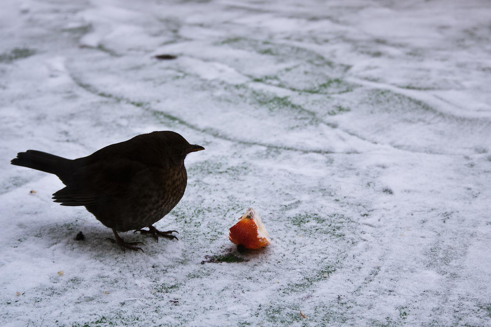 Im harten Winter ist man für jede Nahrung dankbar.