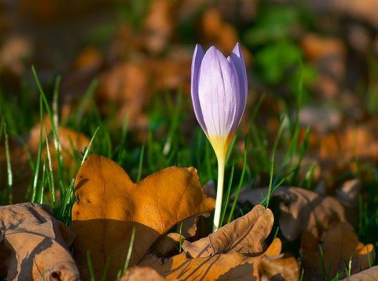 im Herbst aufgeblüht...