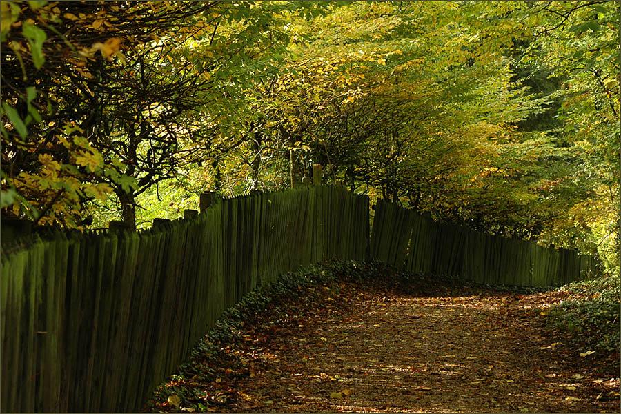| im Herbst |
